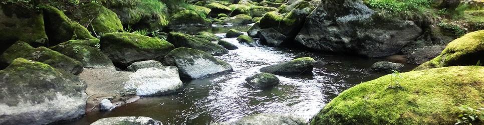 Waldnaab